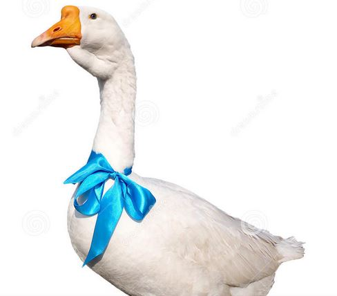 goose with blue bow